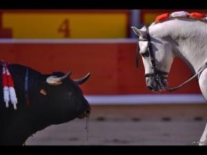 Откровенное видео: Лошадь за 3000000 млн долларов ! Коррида с быком !