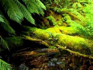 видео: Путеводитель по Австралии