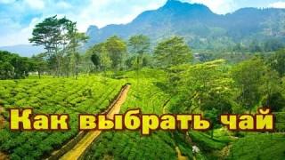 Что привезти из Шри Ланки и как выбрать хороший чай?