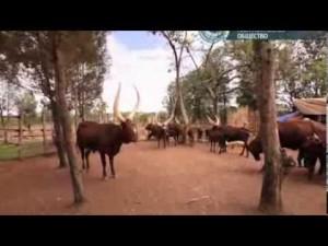 Руанда. В стране без целлофана — Путешествия с Андреем Понкратовым