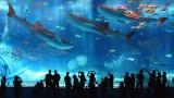 Самый большой океанариум В МИРЕ, Сингапур
