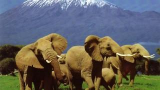 Поездка в Найроби парк. Кения.