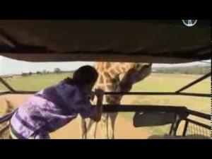 ЮАР. Юг Африки — мировой ковчег — Путешествия с Андреем Понкратовым